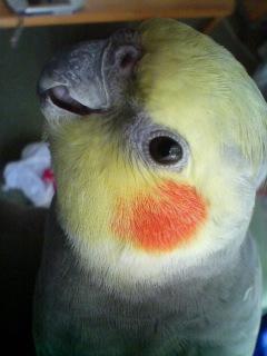 本日の鳥様