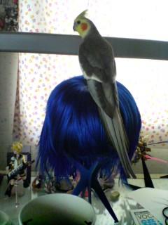 今朝の鳥様